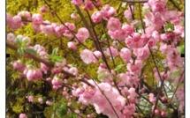 Annonces pour la vie paroissiale 8 mars 2013